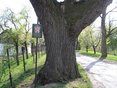 Památné stromy ve správním obvodu měú smiřice